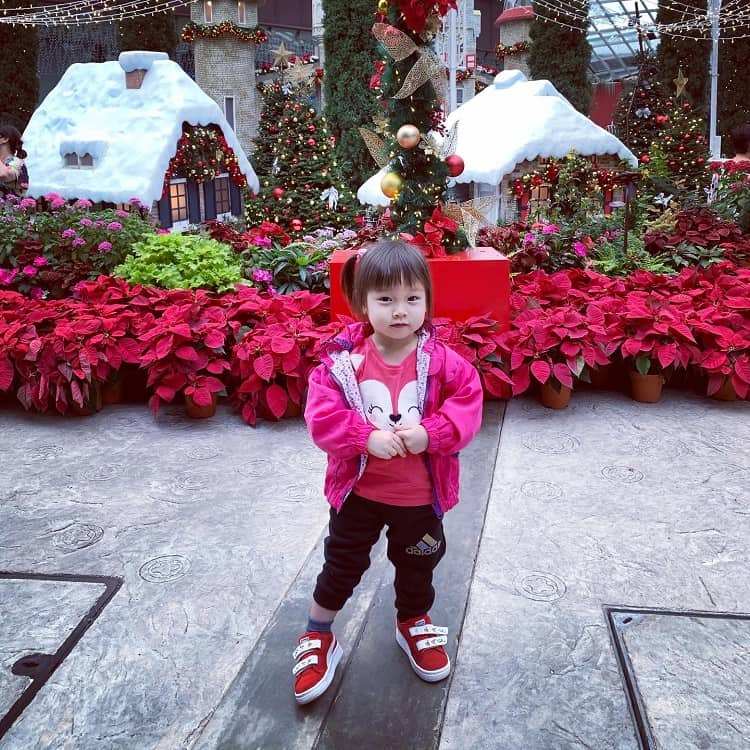 olympia-flower-dome-poinsettia-wishes